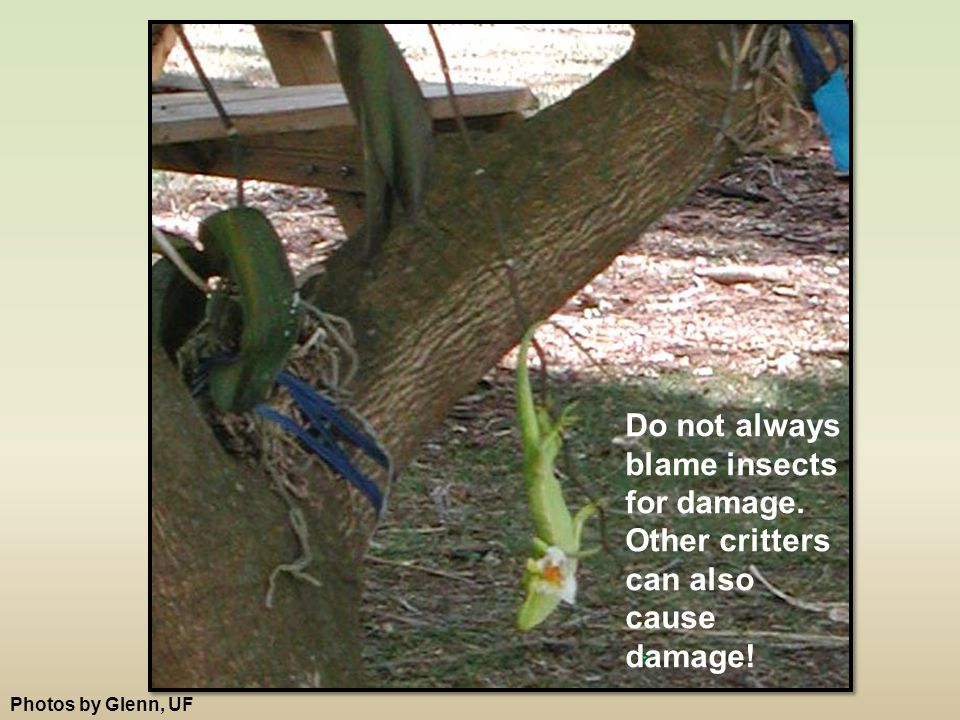 Do not always blame insects for damage. Other critters can also cause damage! Photos by Glenn, UF