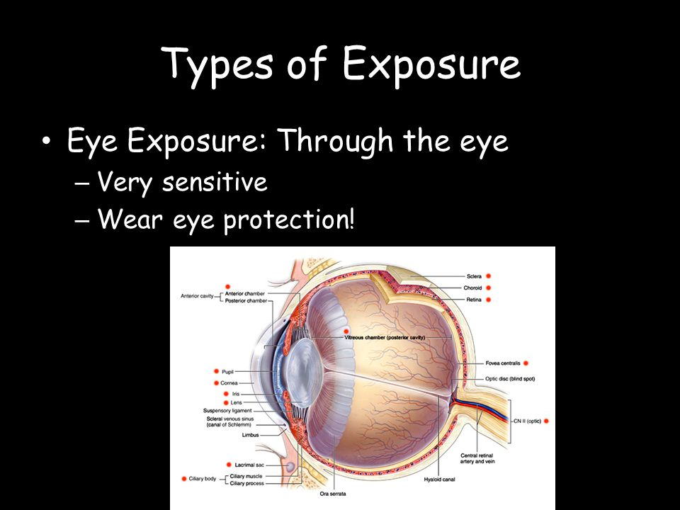 Types of Exposure Eye Exposure: Through the eye – Very sensitive – Wear eye protection!