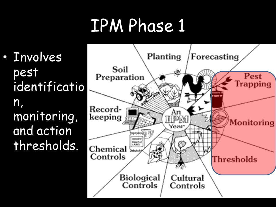 Vocabulary Action threshold Best management practices (BMPs) Economic or aesthetic injury level Integrated pest management (IPM) Scouting