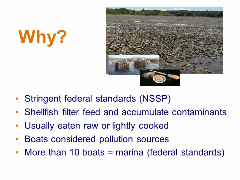 Why? Stringent federal standards (NSSP) Shellfish filter feed and accumulate contaminants Usually eaten raw or lightly cooked Boats considered polluti