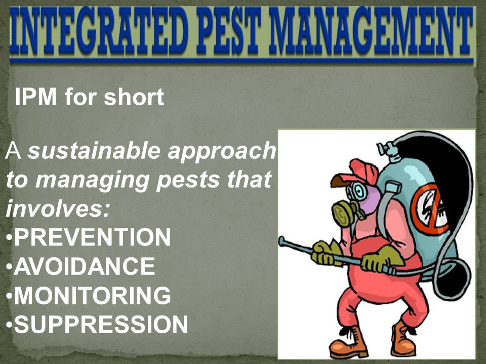 IPM for short A sustainable approach to managing pests that involves: PREVENTION AVOIDANCE MONITORING SUPPRESSION