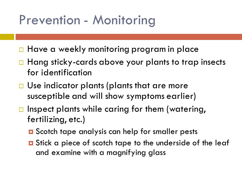 Prevention - Monitoring  Have a weekly monitoring program in place  Hang sticky-cards above your plants to trap insects for identification  Use ind