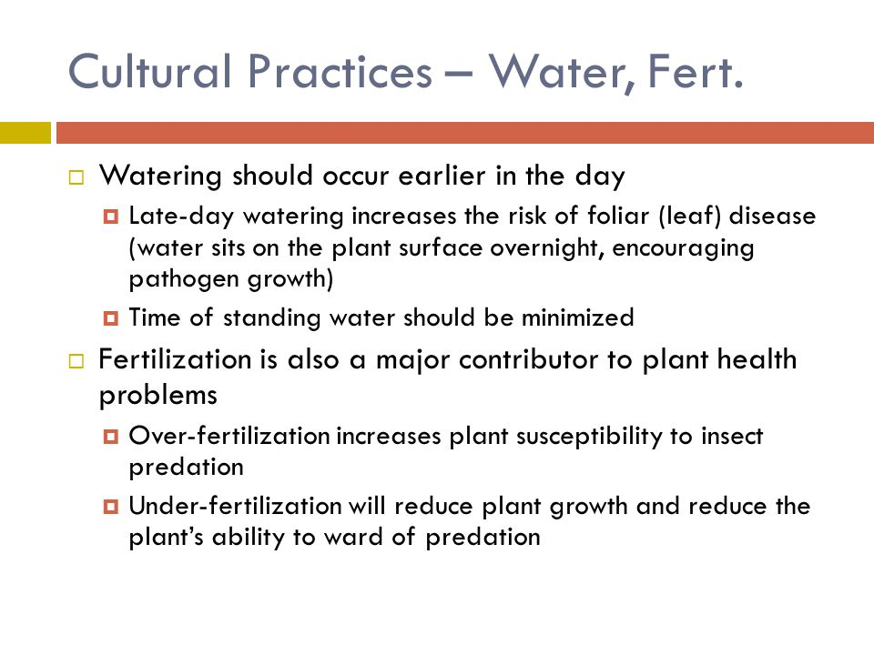 Cultural Practices – Water, Fert.  Watering should occur earlier in the day  Late-day watering increases the risk of foliar (leaf) disease (water si