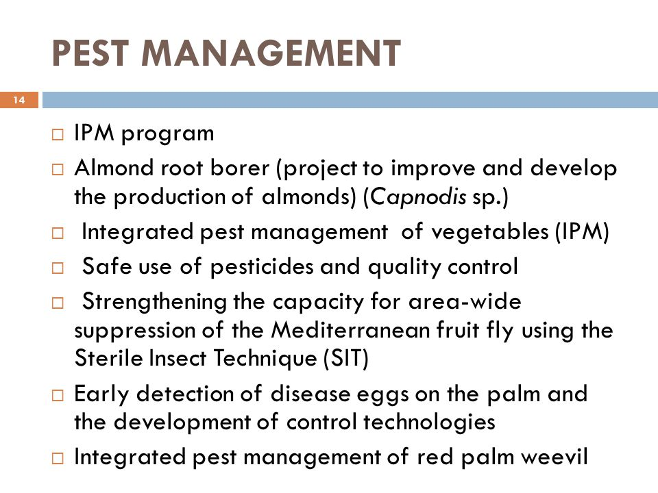 PEST MANAGEMENT 14  IPM program  Almond root borer (project to improve and develop the production of almonds) (Capnodis sp.)  Integrated pest manag