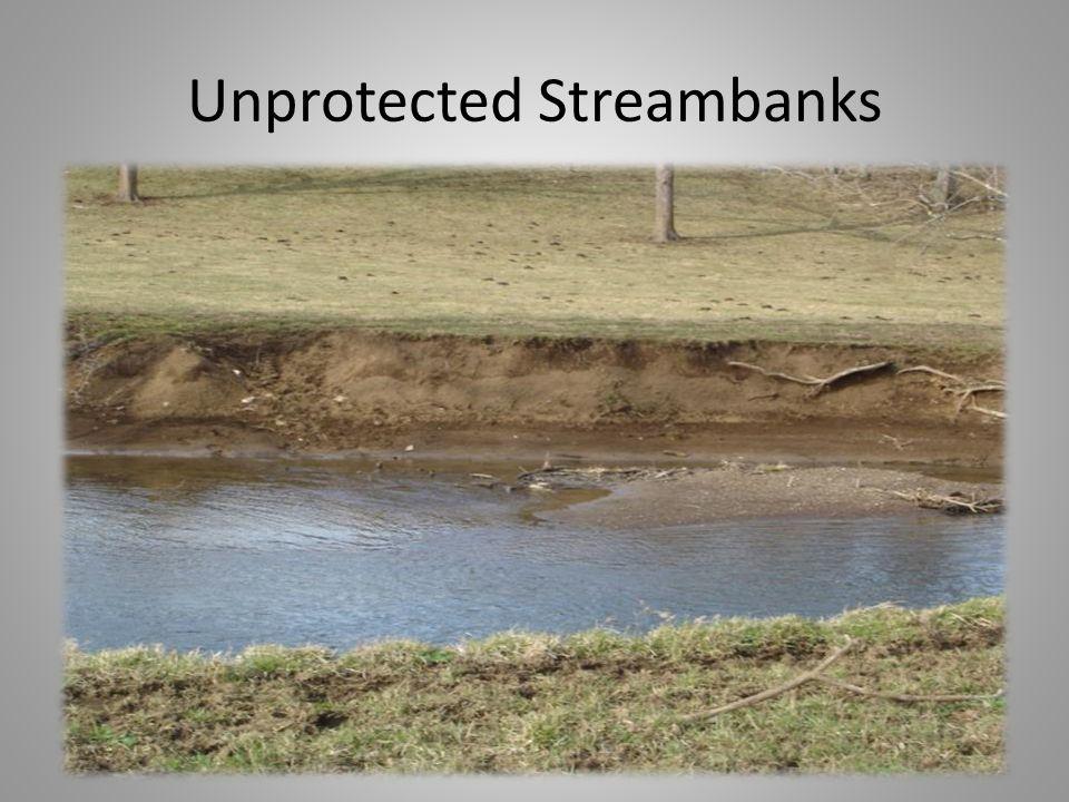 Unprotected Streambanks