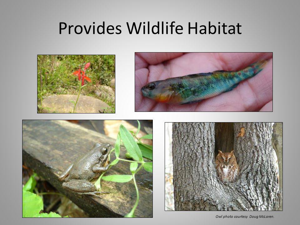 Provides Wildlife Habitat Owl photo courtesy Doug McLaren.