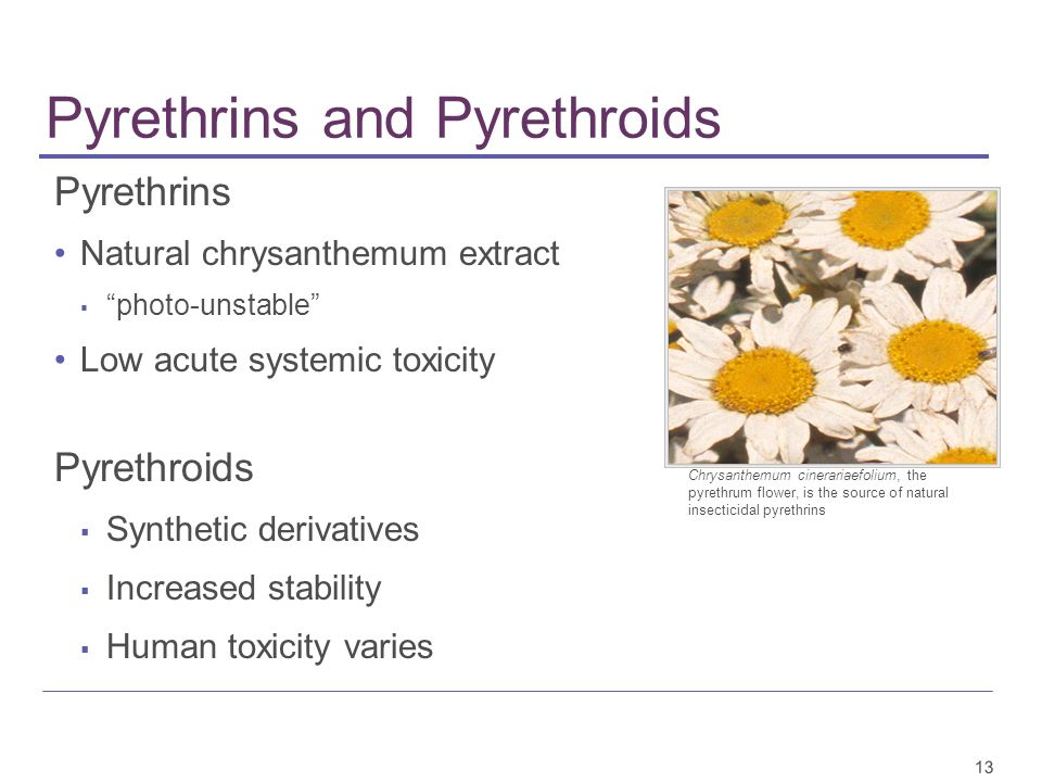 13 Pyrethrins and Pyrethroids Pyrethrins Natural chrysanthemum extract ▪ photo-unstable Low acute systemic toxicity Pyrethroids ▪ Synthetic derivatives ▪ Increased stability ▪ Human toxicity varies Chrysanthemum cinerariaefolium, the pyrethrum flower, is the source of natural insecticidal pyrethrins