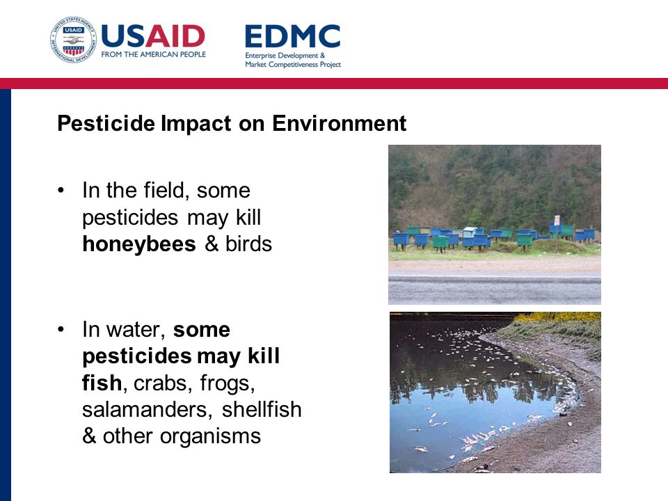 Pesticide Impact on Environment In the field, some pesticides may kill honeybees & birds In water, some pesticides may kill fish, crabs, frogs, salamanders, shellfish & other organisms