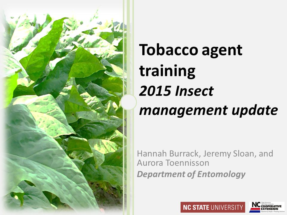 Tobacco agent training 2015 Insect management update Hannah Burrack, Jeremy Sloan, and Aurora Toennisson Department of Entomology
