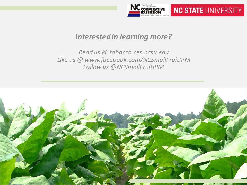 Interested in learning more? Read us @ tobacco.ces.ncsu.edu Like us @ www.facebook.com/NCSmallFruitIPM Follow us @NCSmallFruitIPM
