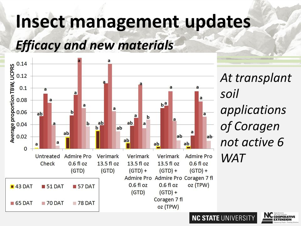 Insect management updates Efficacy and new materials At transplant soil applications of Coragen not active 6 WAT