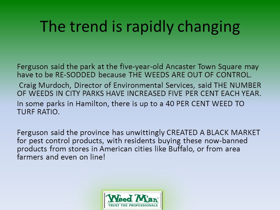 The trend is rapidly changing Ferguson said the park at the five-year-old Ancaster Town Square may have to be RE-SODDED because THE WEEDS ARE OUT OF CONTROL.