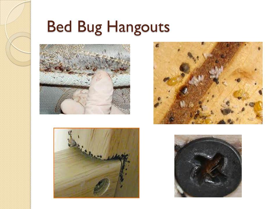 Bed Bug Hangouts