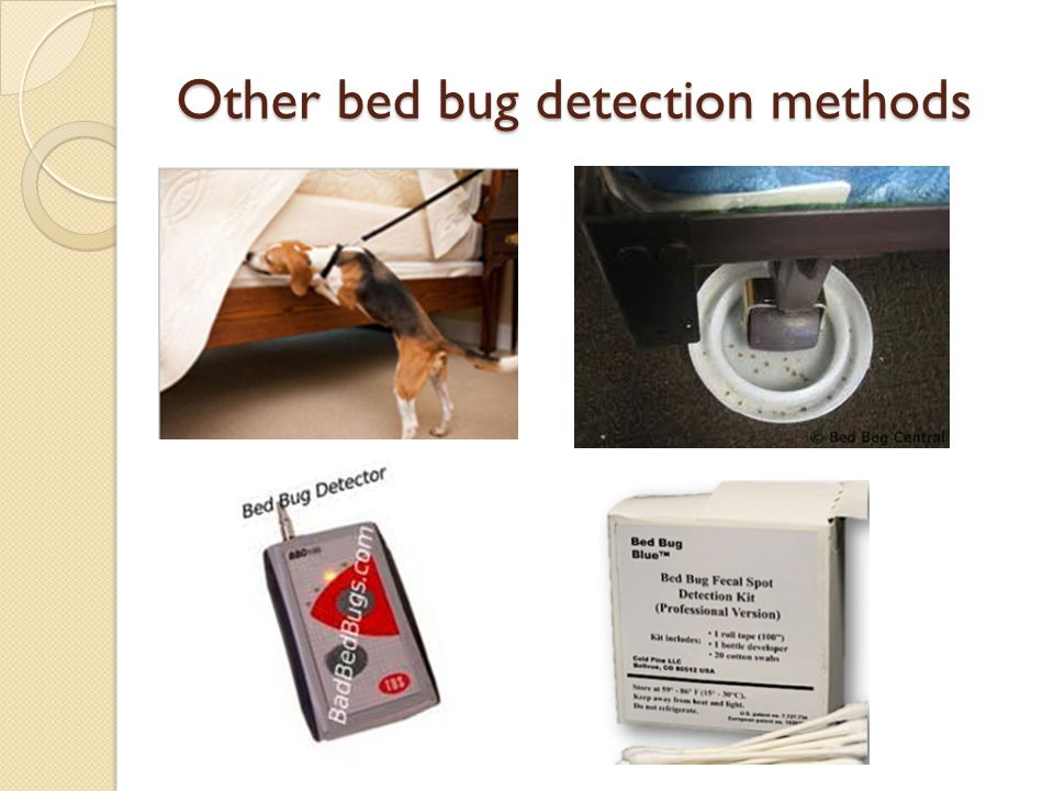 Other bed bug detection methods