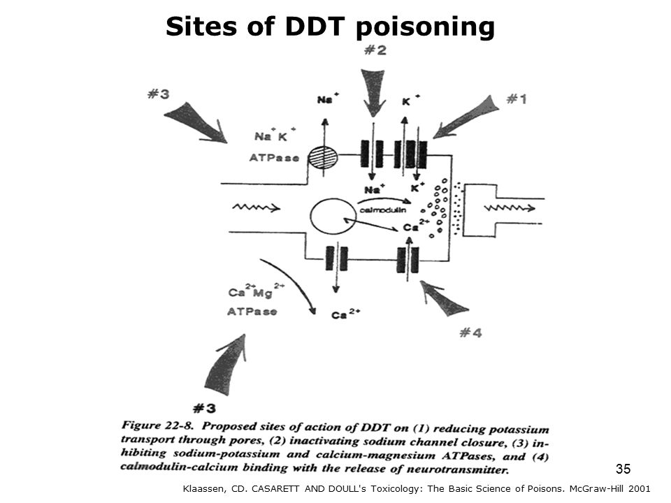 35 Sites of DDT poisoning Klaassen, CD.