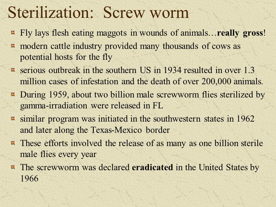 Sterilization: Screw worm Fly lays flesh eating maggots in wounds of animals…really gross! modern cattle industry provided many thousands of cows as p