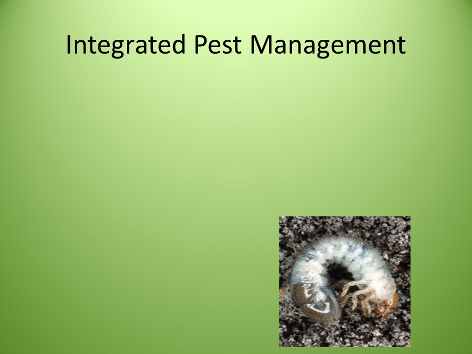 Best Management Practices Increasing competitive ability of desirable species and overall system resilience Utilize cultural, mechanical, or biological controls