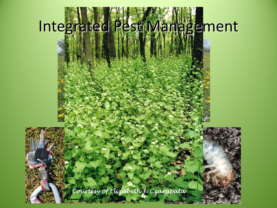 Best Management Practices Increasing competitive ability of desirable species and overall system resilience Utilize cultural, mechanical, or biological controls Employ historically accurate disturbance