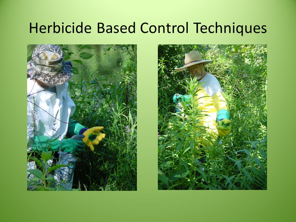 Herbicide Based Control Techniques