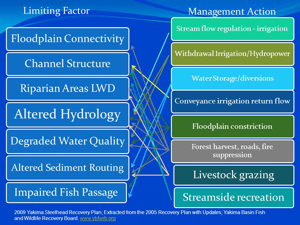 Floodplain ConnectivityChannel StructureRiparian Areas LWD Altered Hydrology Degraded Water Quality Altered Sediment Routing Impaired Fish Passage Stream flow regulation - irrigationWithdrawal Irrigation/HydropowerWater Storage/diversions Conveyance irrigation return flowFloodplain constriction Forest harvest, roads, fire suppression Livestock grazing Streamside recreation Limiting Factor Management Action 2009 Yakima Steelhead Recovery Plan; Extracted from the 2005 Recovery Plan with Updates; Yakima Basin Fish and Wildlife Recovery Board.