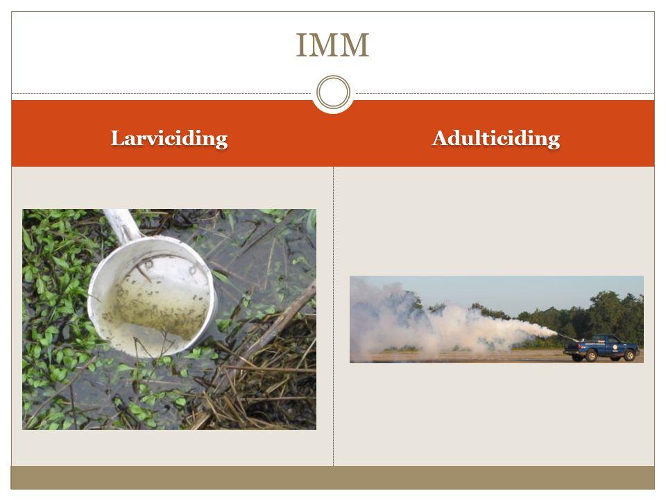 Larviciding Adulticiding IMM
