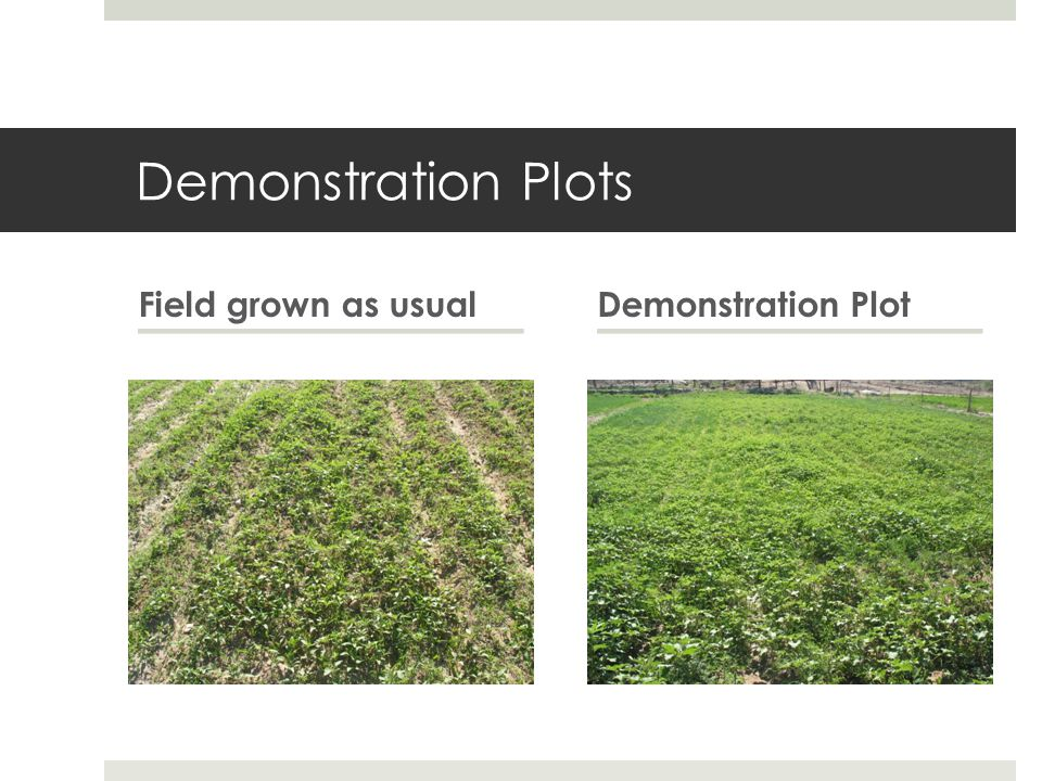 Demonstration Plots Field grown as usualDemonstration Plot