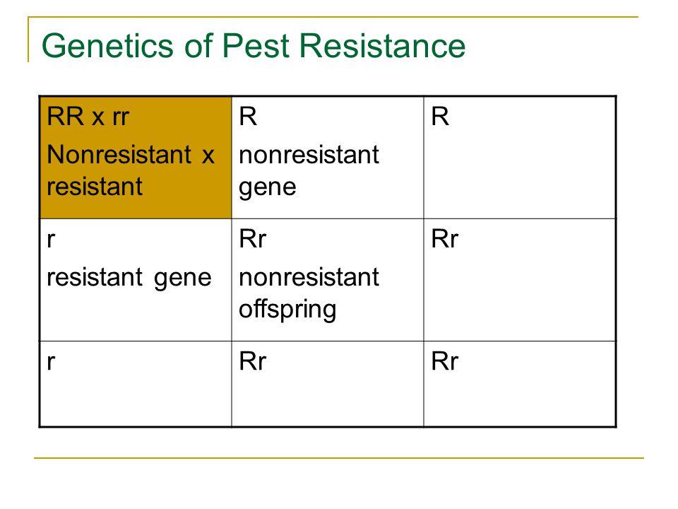 Genetics of Pest Resistance RR x rr Nonresistant x resistant R nonresistant gene R r resistant gene Rr nonresistant offspring Rr r
