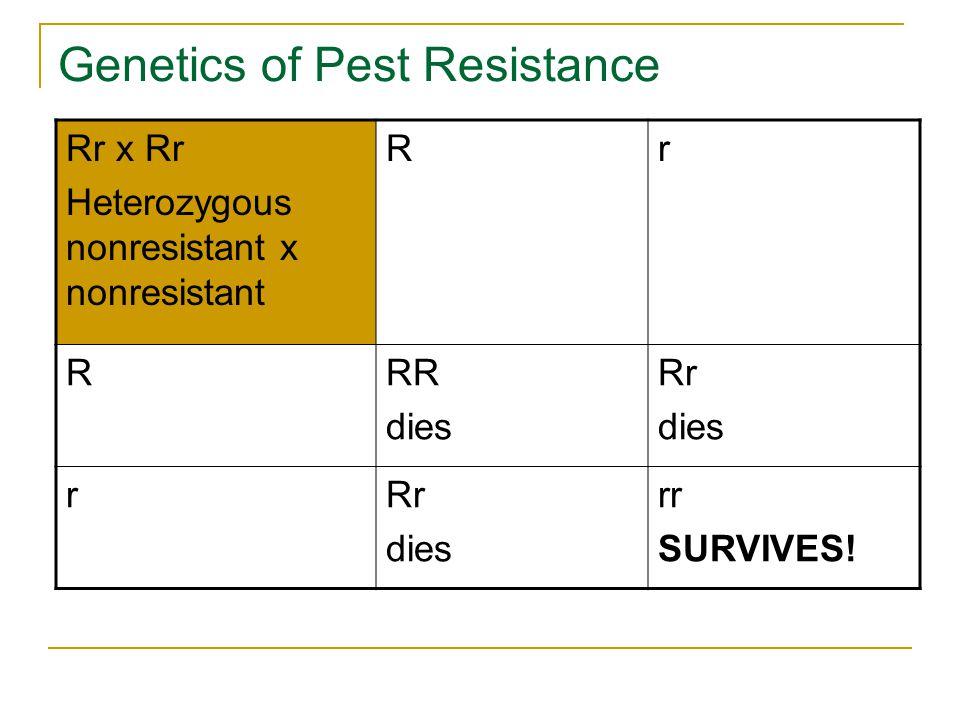 Genetics of Pest Resistance Rr x Rr Heterozygous nonresistant x nonresistant Rr RRR dies Rr dies rRr dies rr SURVIVES!