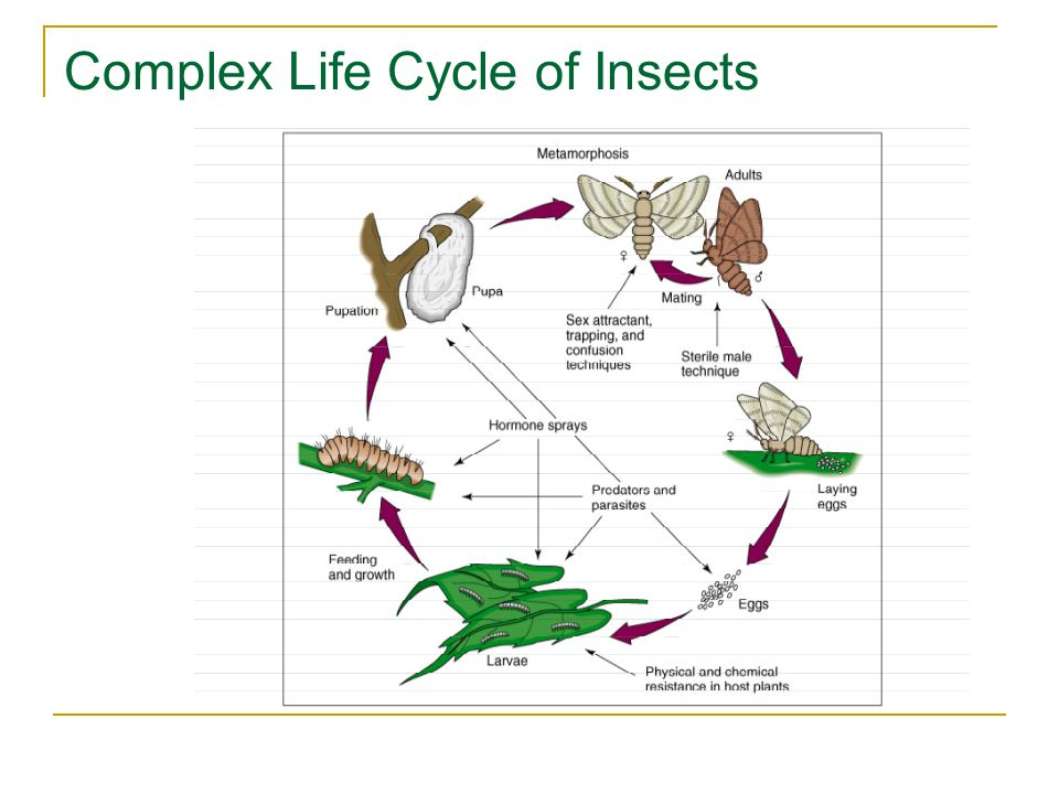 Complex Life Cycle of Insects