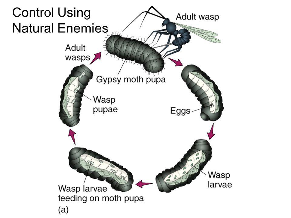 Control Using Natural Enemies