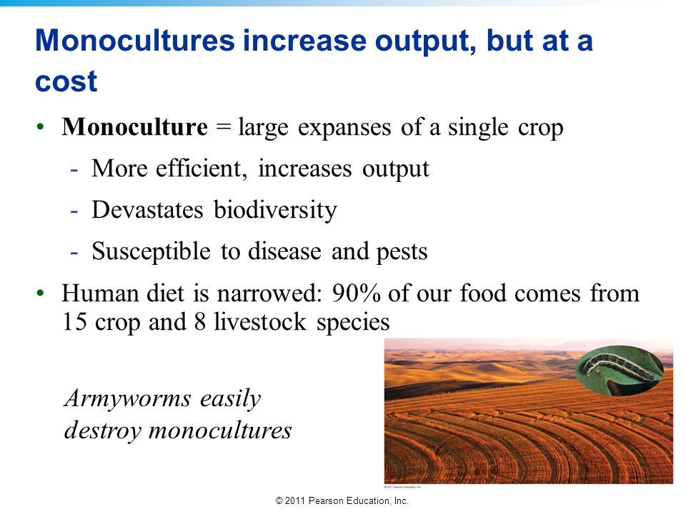 © 2011 Pearson Education, Inc. Monocultures increase output, but at a cost Monoculture = large expanses of a single crop -More efficient, increases ou