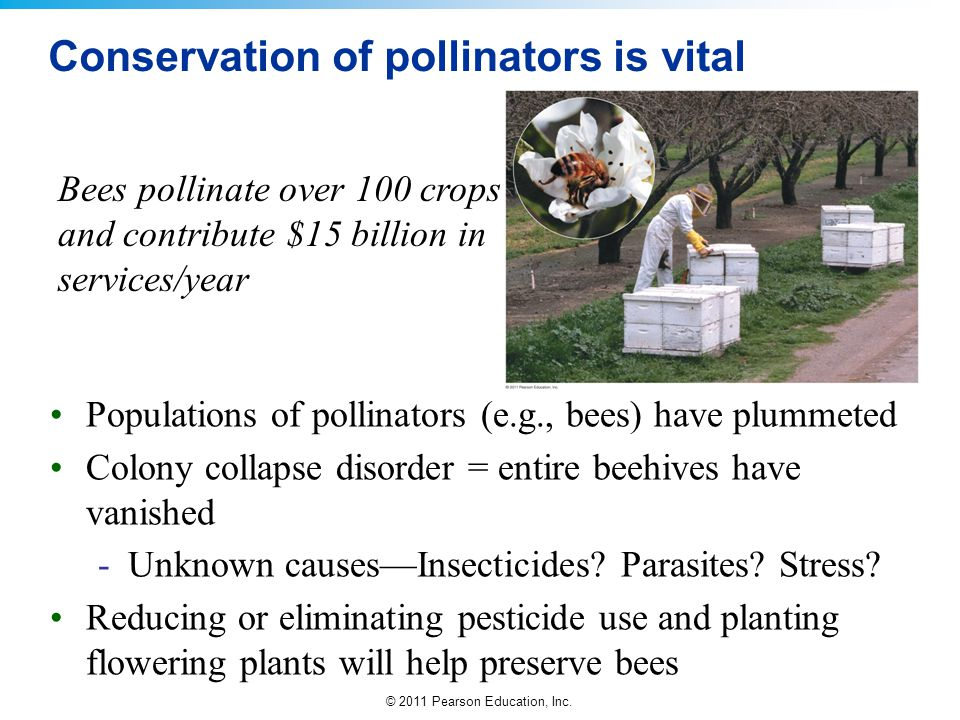 © 2011 Pearson Education, Inc. Conservation of pollinators is vital Populations of pollinators (e.g., bees) have plummeted Colony collapse disorder =
