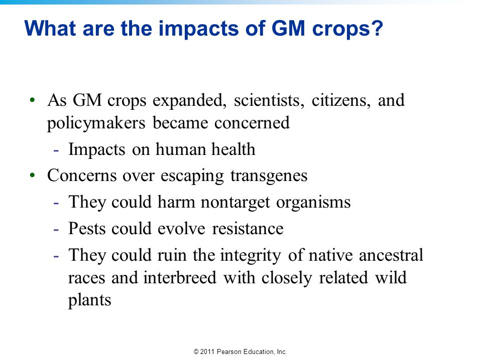 © 2011 Pearson Education, Inc. What are the impacts of GM crops? As GM crops expanded, scientists, citizens, and policymakers became concerned -Impact