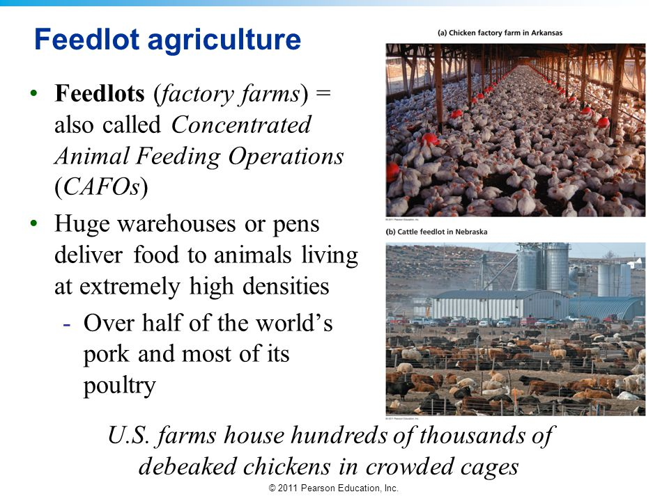 © 2011 Pearson Education, Inc. Feedlot agriculture Feedlots (factory farms) = also called Concentrated Animal Feeding Operations (CAFOs) Huge warehous