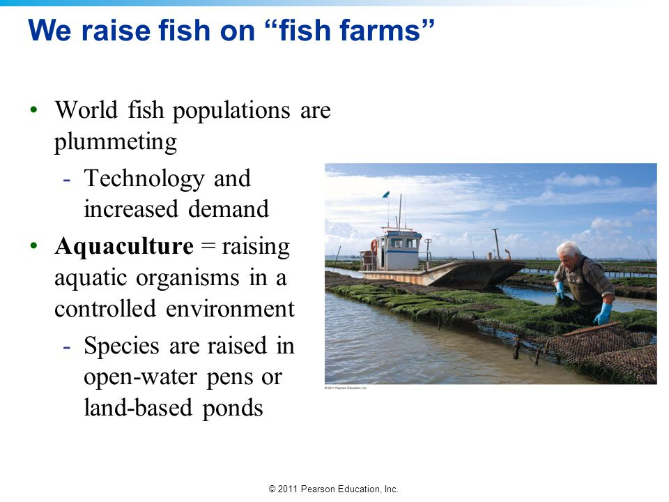 "© 2011 Pearson Education, Inc. We raise fish on ""fish farms"" World fish populations are plummeting -Technology and increased demand Aquaculture = rais"