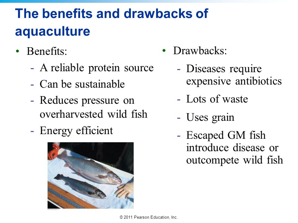 © 2011 Pearson Education, Inc. The benefits and drawbacks of aquaculture Benefits: -A reliable protein source -Can be sustainable -Reduces pressure on
