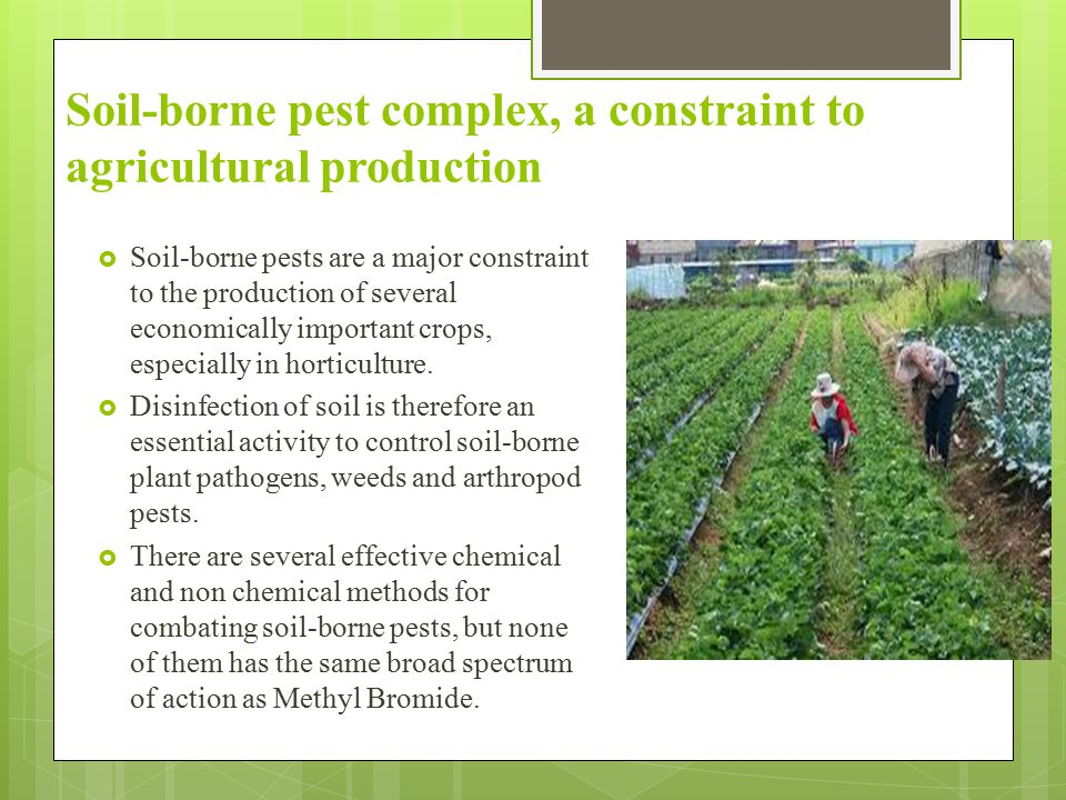 Soil-borne pest complex, a constraint to agricultural production  Soil-borne pests are a major constraint to the production of several economically i