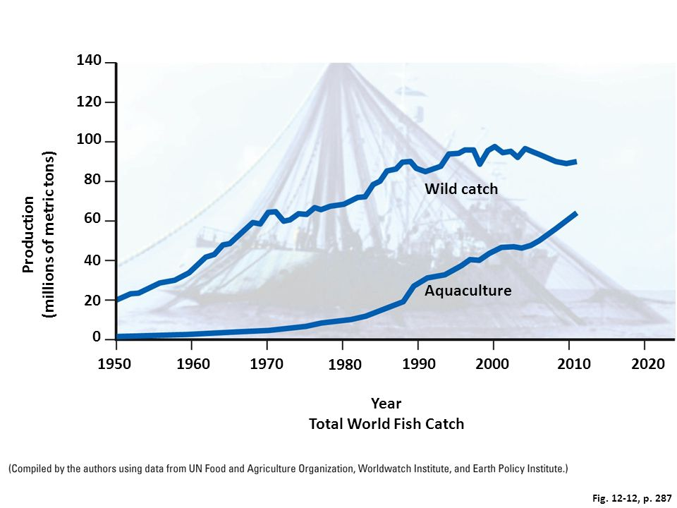 Fig. 12-12, p. 287 140 100 120 80 Wild catch Production (millions of metric tons) 40 60 0 20 Aquaculture Year Total World Fish Catch 19501960197019902