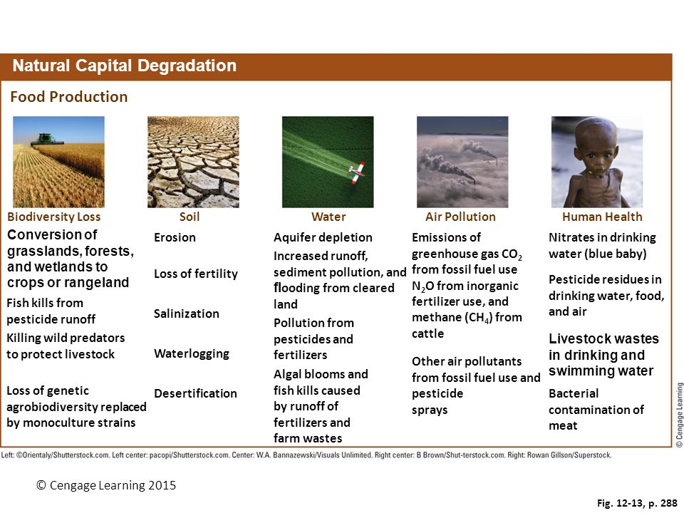 © Cengage Learning 2015 Fig. 12-13, p. 288 Natural Capital Degradation Food Production Biodiversity LossSoilWaterAir PollutionHuman Health ErosionEmis