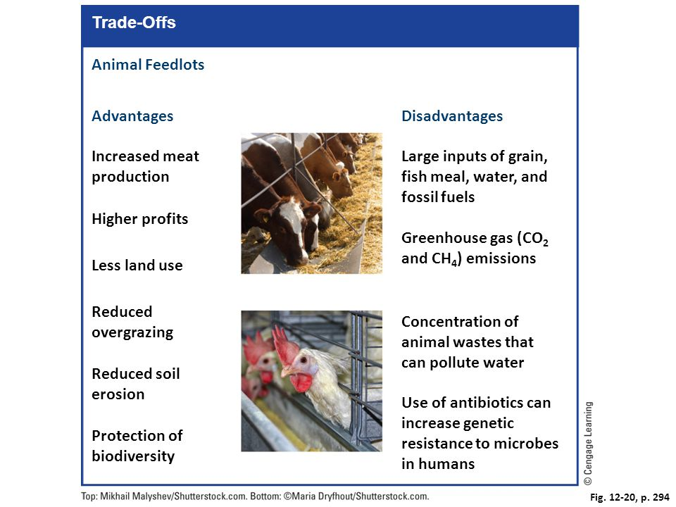 Fig. 12-20, p. 294 Trade-Offs Animal Feedlots AdvantagesDisadvantages Large inputs of grain, fish meal, water, and fossil fuels Increased meat product