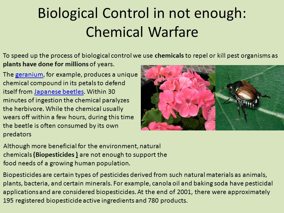 Biological Control in not enough: Chemical Warfare To speed up the process of biological control we use chemicals to repel or kill pest organisms as p