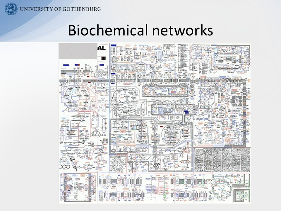 Biochemical networks