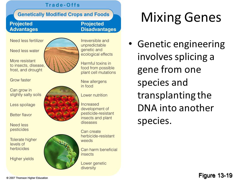 Mixing Genes Genetic engineering involves splicing a gene from one species and transplanting the DNA into another species.