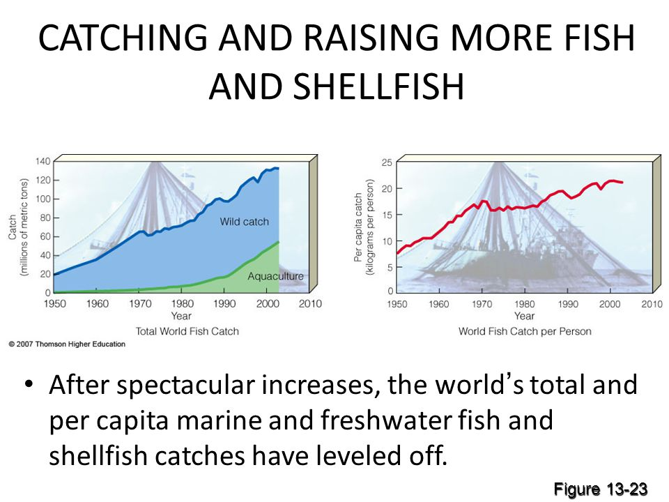 CATCHING AND RAISING MORE FISH AND SHELLFISH After spectacular increases, the world's total and per capita marine and freshwater fish and shellfish catches have leveled off.