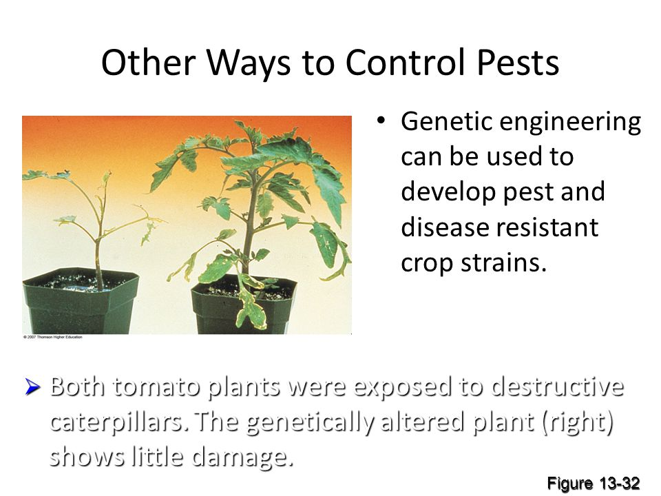 Other Ways to Control Pests Genetic engineering can be used to develop pest and disease resistant crop strains.