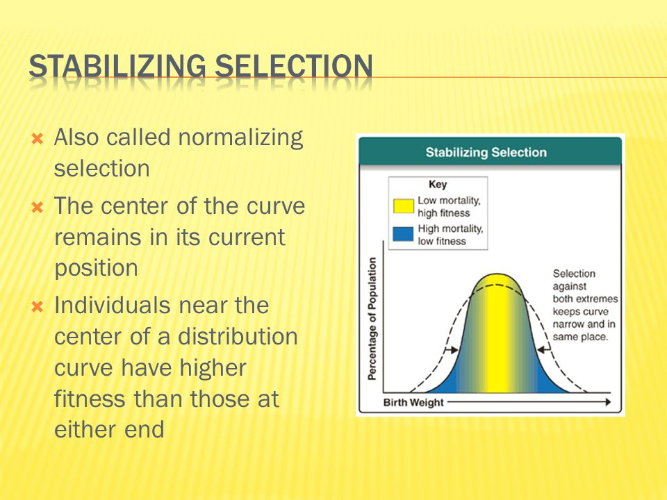  Also called normalizing selection  The center of the curve remains in its current position  Individuals near the center of a distribution curve ha