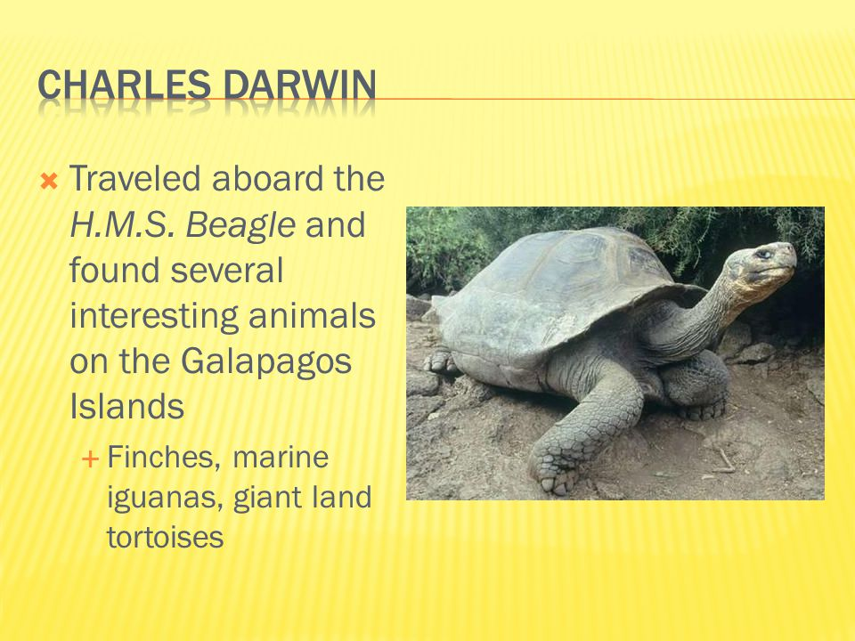  Traveled aboard the H.M.S. Beagle and found several interesting animals on the Galapagos Islands  Finches, marine iguanas, giant land tortoises