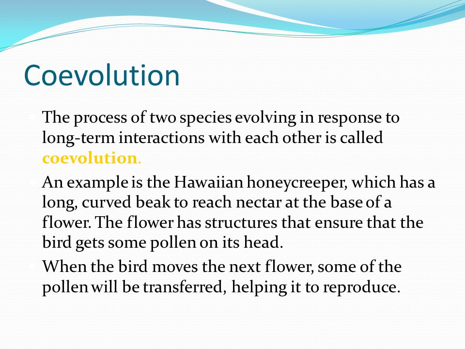 Coevolution The process of two species evolving in response to long-term interactions with each other is called coevolution. An example is the Hawaiia