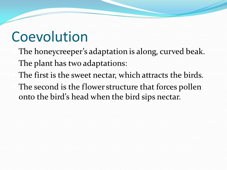 Coevolution The honeycreeper's adaptation is along, curved beak. The plant has two adaptations: The first is the sweet nectar, which attracts the bird