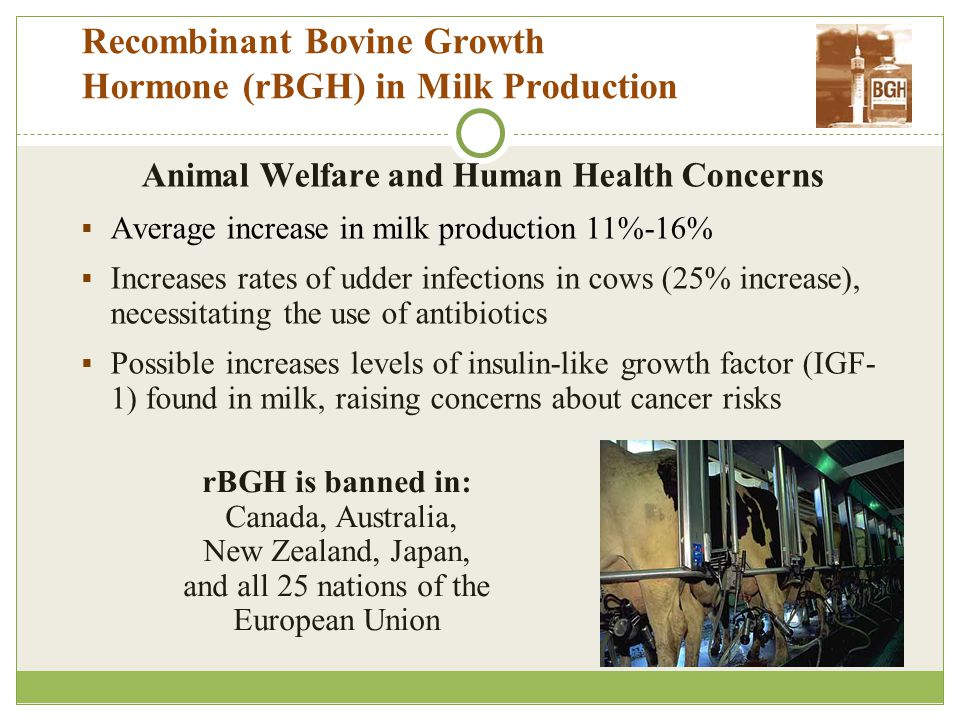 Recombinant Bovine Growth Hormone (rBGH) in Milk Production Animal Welfare and Human Health Concerns  Average increase in milk production 11%-16%  Increases rates of udder infections in cows (25% increase), necessitating the use of antibiotics  Possible increases levels of insulin-like growth factor (IGF- 1) found in milk, raising concerns about cancer risks rBGH is banned in: Canada, Australia, New Zealand, Japan, and all 25 nations of the European Union